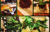 Pflanze Präparatoren - Montage ein Hirschhorn Farn