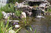 Teich oder Wasser-Garten - wie Hinterhof-Teich bauen