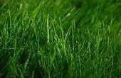 Go Green von wachsenden Green: wie man Energie aus Grass