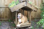 Grün überdacht Hund Veranda
