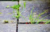 Biologisch abbaubar und sicherere Alternative für kommerzielle Herbizid