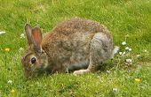 Macht eine wirklich einfachen Kaninchen fangen