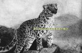 Gewusst wie: eine Amur-Leopard auf dem pastellfarbenen Papier zeichnen