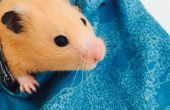 Hamster-Träger