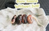 Wachsen Sie Samen ohne Erde!