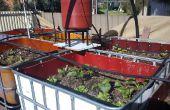 Vermiponic Garten