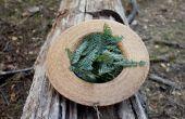 Redwood Essig