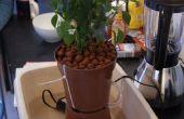 Hydroponische Tropf wachsenden Starter Kit (mit Chilis)