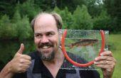 Rahmen für das Fotografieren von lebenden Mikro-Fischen Fischen