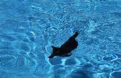 Wie man eine Katze zu schwimmen zu lehren.