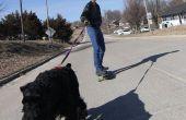 Skatejoring mit Hunden