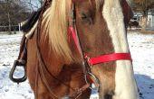 Wie Sie Ihr Pferd mit Zeitmanagement üben