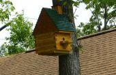 Flughörnchen Haus w/Spy-Cam