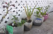 Mein Mini-Küche-Garten