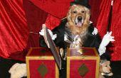Erstaunlich, Zauberer Sägen Assistant in halben Kostüme