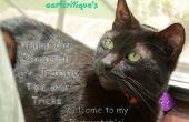 Richtige Katze Eigentum, Pflege, Training, Tipps und Tricks