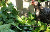 Essbare Hecken - das Beste aus Ihrem Grundstück mit Baum-Futter und Heu Baum