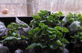 Bio-Fenster Garten