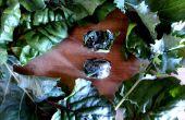 Garten Grüns in Eiswürfel Behälter Einfrieren
