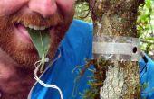 Fiber-Optic Jungle Insect Traffic Taster