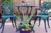 Eine Pflanze mit Zweck: How to Care für Aloe Vera