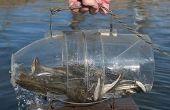 Wie erstelle ich einen Fisch fangen in 30 sec