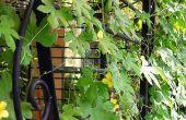 Wiederzuverwenden Zäune als Garten Rankgitter verwendet