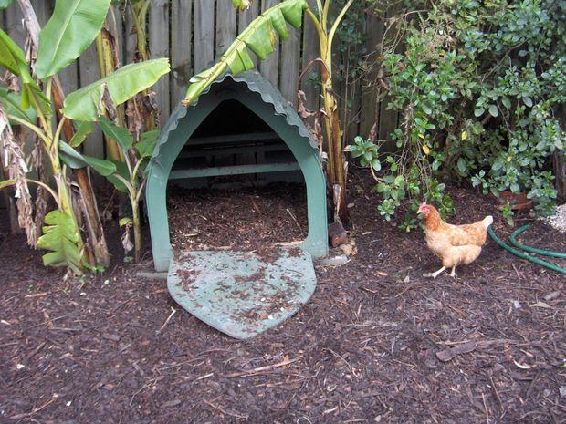 Fußboden Im Hühnerstall ~ Fußboden im hühnerstall hühnerstall vergießen von fugen im