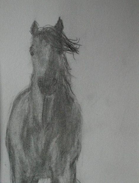 Wie Pferde Zeichnen Genstr Com